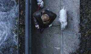 Una dona surt a passejar amb dos gossos.