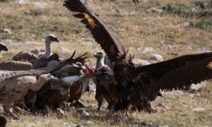Unió de Pagesos reclama plans de control de la fauna salvatge