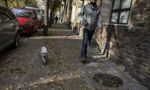 Un gos amb el propietari.