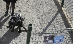 Un gos en un pipicà d'Escaldes-Engordany.
