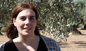 Arasa, en un oliver de Santa Bàrbara com els que serveixen d'escenari al poemari.