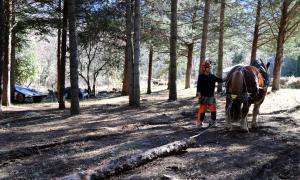Una empresa recupera la tracció animal per a treballs forestals