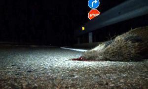 250 accidents de trànsit amb algun animal implicat el 2016
