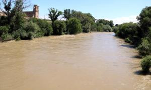 El riu Segre tot just abans de confluir amb el Cinca, a la Granja d'Escarp.