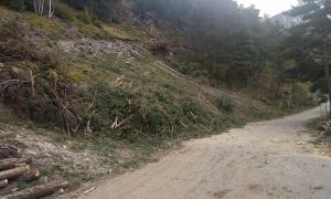 Arbres talats a la zona on es farà l'excavació per ubicar-hi l'ETR.
