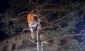 Tradicional plantada del pi a la Plaça de l'arbre de Castellciutat.