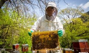 L'apicultor Mathieu Garaud en plena activitat.