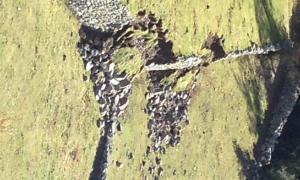 Camp de voluntaris per refer una feixa caiguda a RàmioLa feixa que es rehabilitarà.