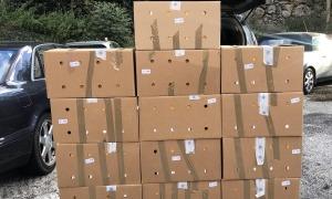 Les caixes amb els cartrons de tabac comissats, aquesta tarda.