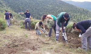 Uns cent voluntaris milloren les pastures de Llosaus i Ginestarre