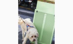"""SDP acusa el Comú d'usar les miccions canines per """"tapar la mala gestió"""""""