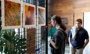 Exposició de pintures solidàries amb els refugiats