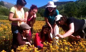 'explotació d'àrnica a l'Alta Ribagorça amb visitants a l'explotació.