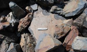Cal una vista molt fina per detectar aquest gravat antropomorf a la pedra: aquest és el que va desaparèixer el 2009.