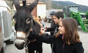 Una ruta dóna la possibilitat de portar un ruc català de traginer
