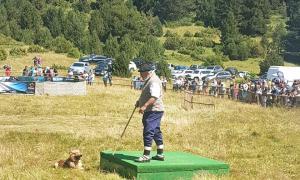 Un moment del concurs de gossos d'atura celebrat ahir.
