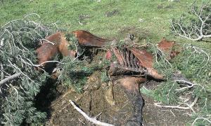 L'os va atacar una euga a la muntanya de Son del Pi.