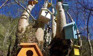 Andorra, biennal, land art, Xarxa antimeteorit, Comunitat aucellenca, Mesalles, Moles