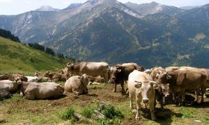 Un ramat al Parc Natural de l'Alt Pirineu.