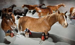 'Fixats en la contemporaneïtat', la instal·lació amb què Balmaseda va concórrer el 2013 a Venècia.
