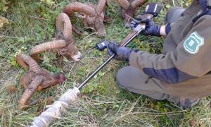 Agents rurals denuncien una xarxa de caçadors furtius professionals