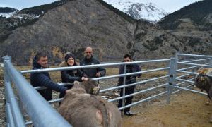 Miquel Naudi, Vanessa Torres i Dani Torres van visitar ahir una explotació ramadera.