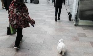 Una dona passejant amb el seu gos per la via pública.
