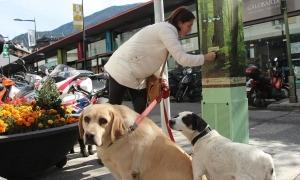 Una propietària amb els seus gossos.
