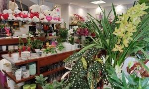 Interior de la floristeria Aqua Nova, que es va dedicar ahir a posar a punt la botiga.