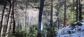 El Bosc Viu d'Ordino.