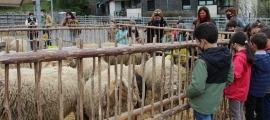 Alumnes visitant la fira del bestiar d'Ordino.