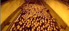 Mobilitat! Una imatge de les càmeres de mobilitat que capta el pas de les ovelles pel túnel dels Dos Valires.
