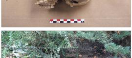 Crani de la noia d'entre 15 i 17 anys exhumada a la Feixa del Moro: va viure cap al 3700 abans de la nostra era i va ser enterrada a la cista d'aquí dalt. L'anàlisi de l'ADN ha demostrat que el nadó que va ser inhumat al seu costat era fill seu.
