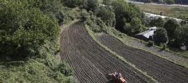 Un camp amb el tabac acabat de plantar fa uns dies.