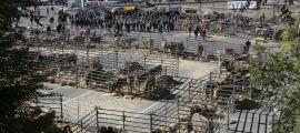 La ministra Sílvia Calvó ha anunciat la llei òmnibus al sector en el marc de la 42a Fira concurs del bestiar d'Andorra la Vella.