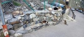 La colònia de gats del carrer Mestre Xavier Plana a Andorra la Vella que gestiona Laika.