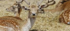 La reserva Wild Forest havia d'acollir 35 animals procedents del parc.