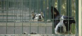 Imatge d'un parell de gossos a les instal·lacions de la gossera.