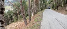 La tala d'arbres a mà esquerra de la carretera de la Gonarda. El bosc que hi havia era com el que es pot veure a l'altura del tractor.
