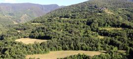 Prats de dall a la Coma de Burg, al Parc Natural de l'Alt Pirineu.