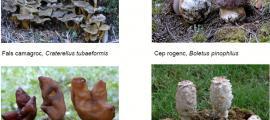 El Parc Natural de l'Alt Pirineu té hàbitats per a diversos tipus de bolets.