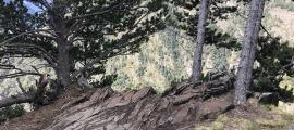 Perspectiva general del jaciment, amb els gravats distribuïts per tot l'aflorament d'esquist.