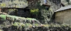 La pedra dreta de Molleres, la setmana passada, s'aixeca enmig d'un camp de ca l'Endrieta.