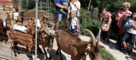 Un ramat de cabres de la formatgeria de Montmalús sortint a pasturar sota la mirada del públic de les Visites a pagès.
