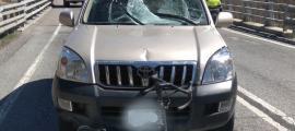 El vehicle va impactar contra el ciclista a l'N-260.