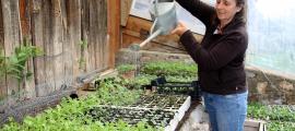 Suzette Böhringer regant plantes aromàtiques i medicinals que té dins l'hivernacle.