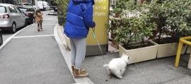 Un noia passeja un gos a la via pública.