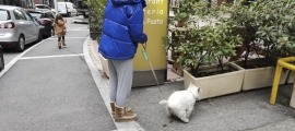 Una noia recollint la tifa del gos.
